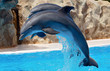 Quadro dolphins