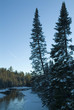 boreas river and pine trees with ice and snow