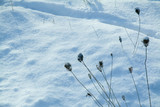 dead plants in the snow poster