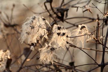 semi strani in un bosco in inverno