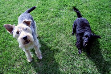 due cani in giardino