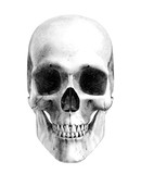human skull - front - pencil drawing style poster