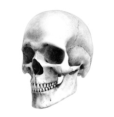 human skull - 3/4 view - pencil drawing style
