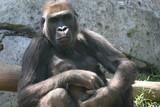 gorilla mom poster