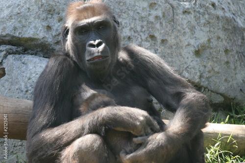 poster of gorilla mom