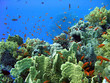 coral reef 45