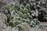 frozen cactus 2 poster