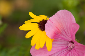yellow and pink flower bloom blossum pretty