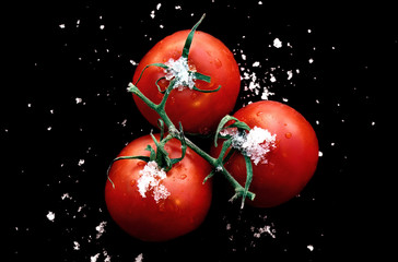 winter tomatoes