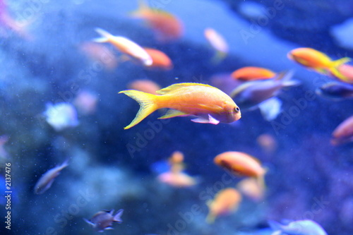 orange fish on blue