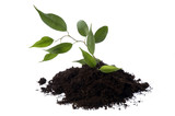 growing young plant in soil poster