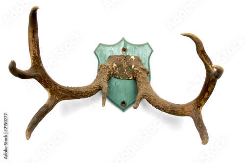 antlers on white 2