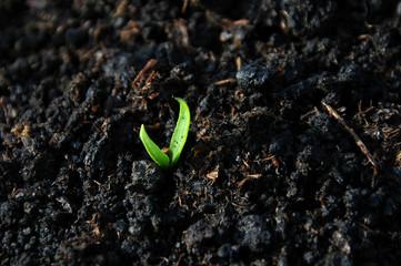 born plant