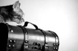 gato curioso poster