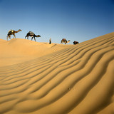 caravane de dromadaires et les dunes du sahara