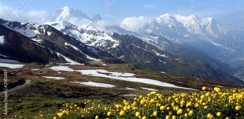 zielona-igla-mont-blanc-zolta-flora-im-39-py
