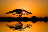 acacia tree at sunrise - 2165695
