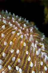 hard coral close-up indonesia sulawesi