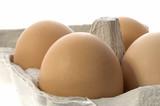 brown eggs in a grey cardboard carton box poster