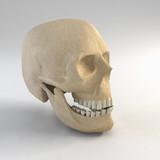 skull 3d rendering poster