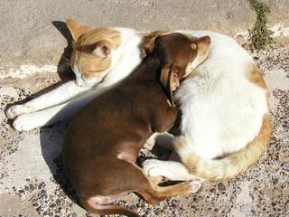chat & chiot se protégeant du froid