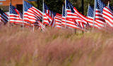 american flag display in honor of veterans day poster