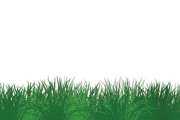 grass_on_a_white_background