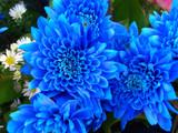 Fototapeta niebieski - ogród - Kwiat