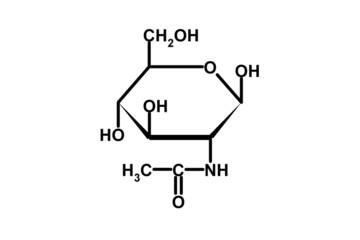 n-acetylglycosamine