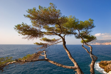 tree on coast