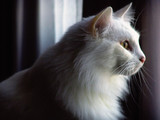 portrait of a feline poster
