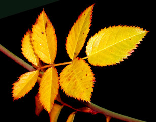 lighted leaves