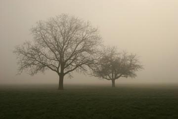 nebel im feld