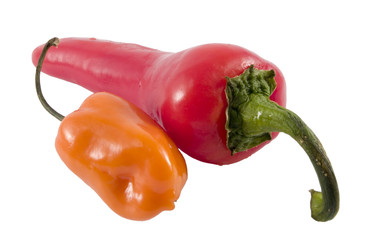 hot_peppers9