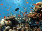 scena koralowa