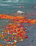 flowers at the river ganges in india poster