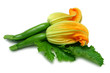 courgettes with flower