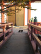 cat on a bridge in a temple