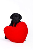puppy with red heart