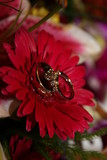 ring band flower gerbera gerber daisy red jewelry poster
