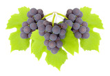 some clusters of a grapes poster