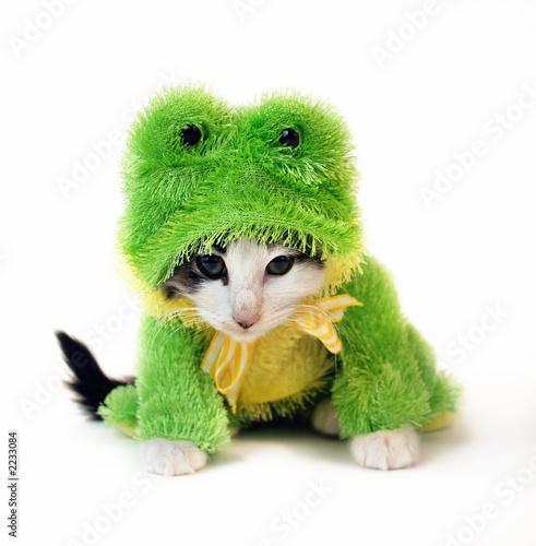 frog kitten