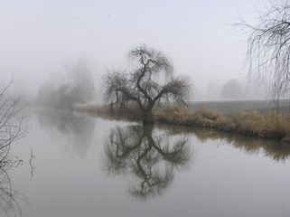 foggy trees beside a creek