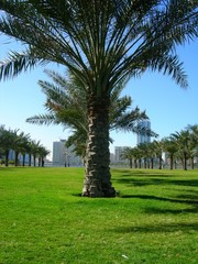 palm tree in the park2