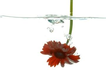 flower under water