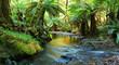 Leinwandbild Motiv rainforest river panorama