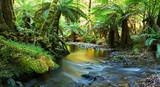 rainforest river panorama-