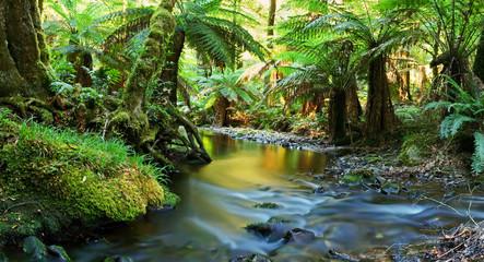 Rainforest rzeki panorama