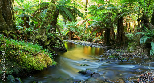 Foto op Aluminium Rivier rainforest river panorama
