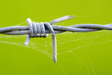 close up of barbed wire